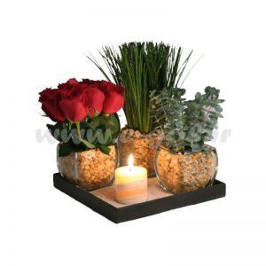 گل رومیزی لومیا