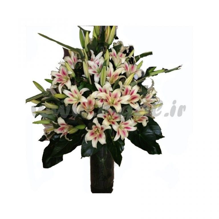 گل سونیا