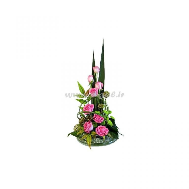 گل رونیکا
