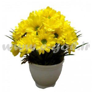 گل آتاناز