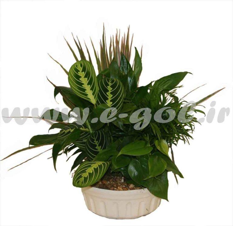 مجموعه گیاه آپارتمانی2
