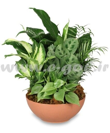 مجموعه گیاه آپارتمانی 1