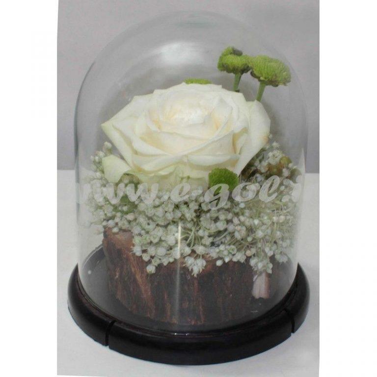 تراریوم گل رز