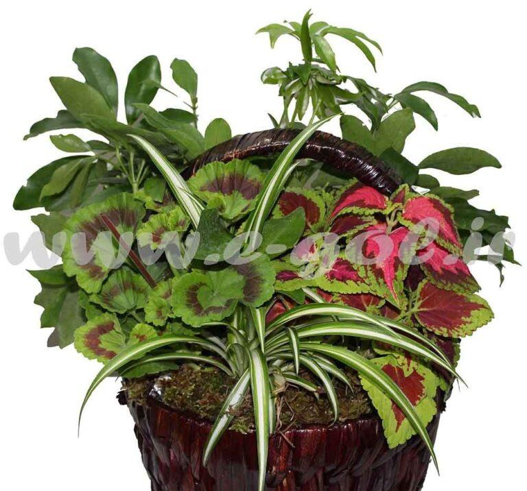 مجموعه گیاهان آپارتمانی