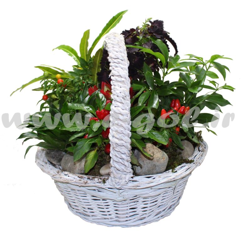 مجموعه گیاهان آپارتمانی6