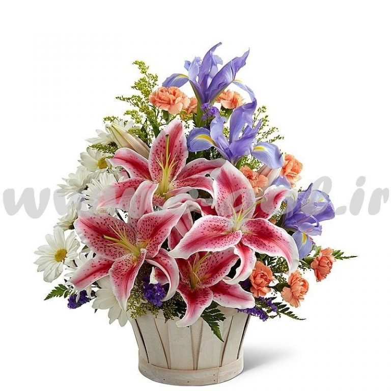 گل صوفیا
