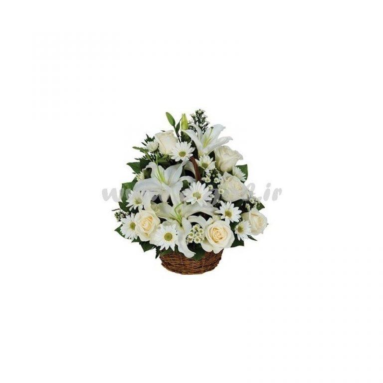 گل مانیا