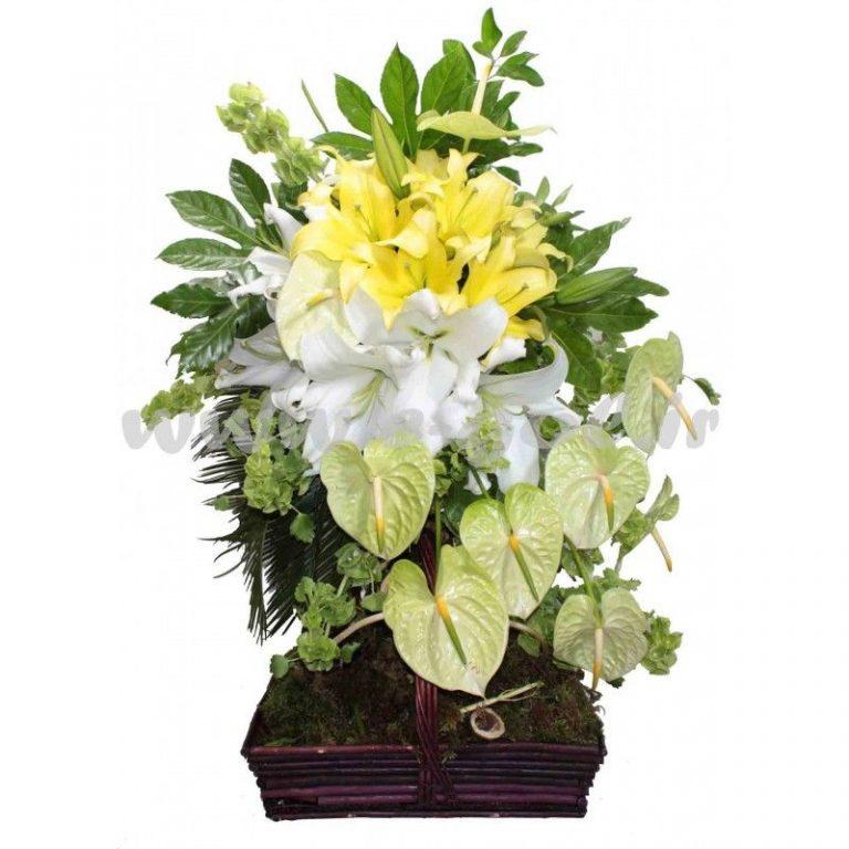 گل نادیا