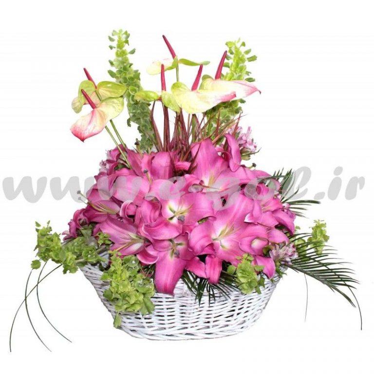گل لورا