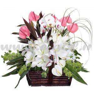 گل انوشک
