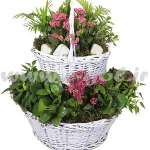 مجموعه گل آپارتمانی