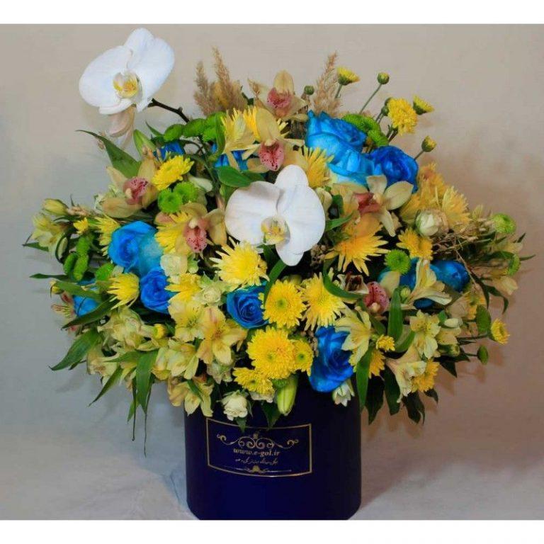 گل ورونیکا