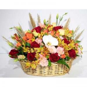 گل آماندا