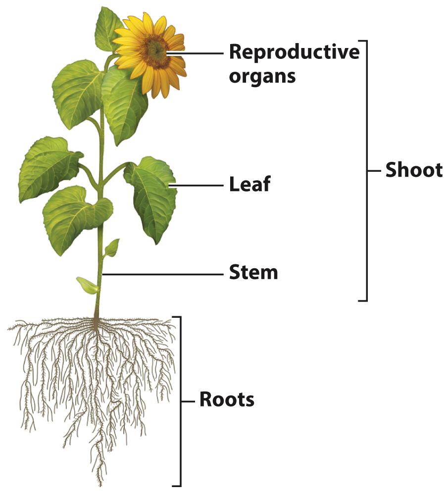 تعاملات گیاهان